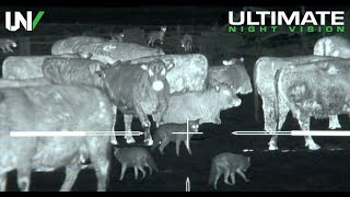 Thermal Predator Hunting | 45 Coyotes Down with the IR Hunter MKIII 35mm