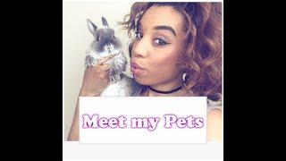 Meet all my pets