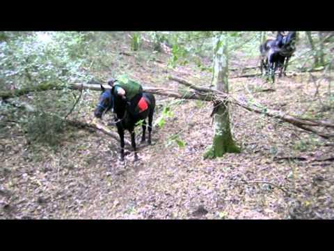 Horse Limbo :)