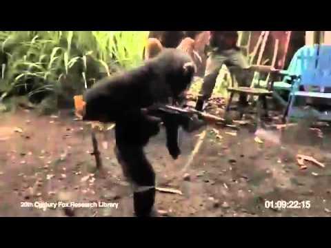 Xxx Mp4 Funny Monkey Bandar Ka Haat Main Ak 47 FLV 3gp Sex