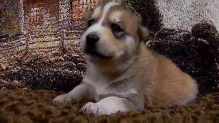 TRY NOT TO LAUGH-Funny Puppies Fails Compilation 2016