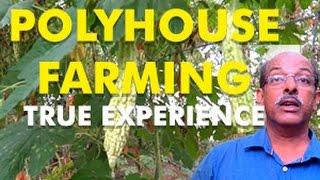 True experience of a Polyhouse farmer