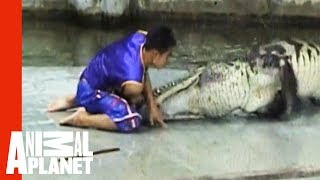 Crocodile Death Roll   Untamed and Uncut