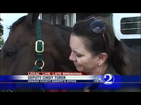 OCSO Search Horse Retires
