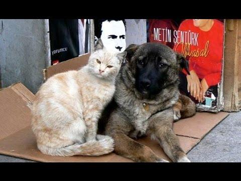 日本では見られない情景(野良猫・野良犬)優しい人々に包まれて・・・