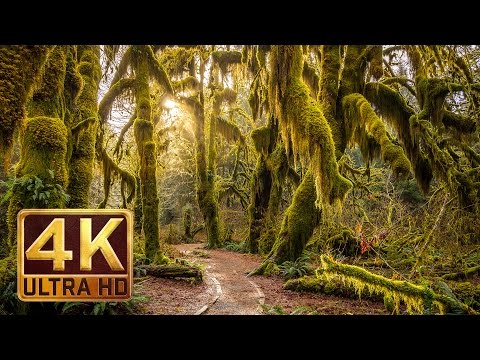 Xxx Mp4 4K Hoh Rain Forest Nature Relaxation Video 3gp Sex