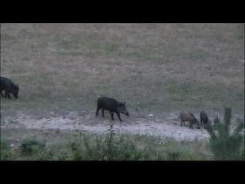 Лов в ДЛС РУСАЛКА гр Априлци 1ва част