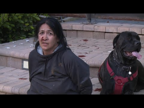 Xxx Mp4 Did Woman Accused Of Leading RV Chase Steal Dogs As Well 3gp Sex