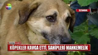 Köpekler kavga etti, sahipleri mahkemelik