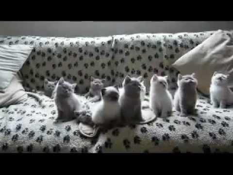 Kucing Paling Comel Menari Sangat Comel