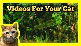 Videos for your Cat - Longest Aquarium Fish Tank Video On Youtube