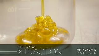 Distillate Extraction at Vapen Clear: The Art of Extraction with Roxy Striar