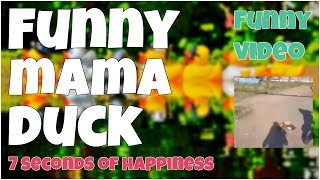 Funny mama duck fail 🔸 7 second of happiness FUNNY Video 😂 #352