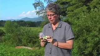 Southern Appalachian Herbs with Patricia Kyritsi Howell - Sumac, Passion Flower and Skull Cap