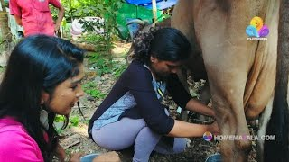 Malayali Veettamma | മലയാളി വീട്ടമ്മ  | Flowers | Task | JESNA | പശുവിനെ കറക്കൽ