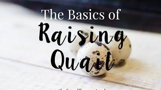 The Basics of Raising Quail