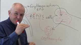 EPO stands for eythropoietin.