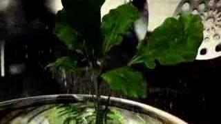 Hortifruti   Incrível Rúcula