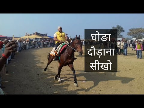 Xxx Mp4 घोङा दौड़ाना सीखो LEARN HORSE RIDING AS PROFESSIONAL RIDERS FOR REHVAL CHAL 3gp Sex
