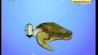 ( حشرة البق ...ومنوعات أخرى ) : : أحياء في كل مكان : : المجد الطبيعية