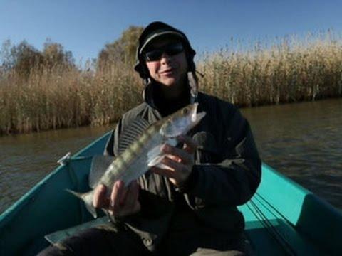 диалоги о рыбалке в астраханской области