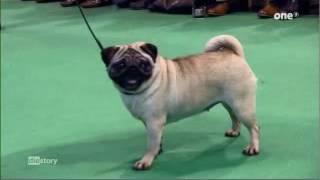 Hundezucht und VDH in der Kritik