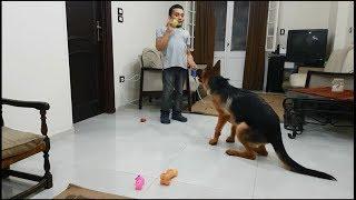 تدريب الكلب على الكلام بالامر TRAIN YOUR DOG TO SPEAK !!!!