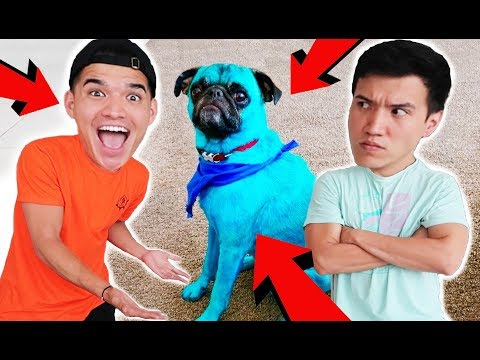 I DYED MY BROTHERS PUPPY BLUE! *not clickbait*