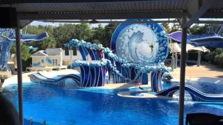 Blue Horizons - Dolphin Theater | Sea World Orlando