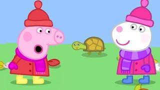 Peppa Pig Português Brasil 🐢 A TARTARUGA DA DRA. HAMSTER 🐢 Peppa Pig