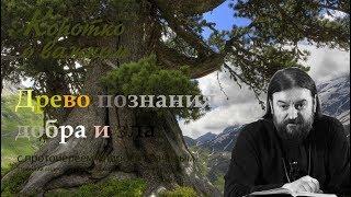 Древо познания добра и зла. о. Андрей Ткачев Зачем оно нужно?