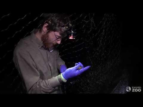 Xxx Mp4 In The Field Toronto Zoo Bat Diaries 3gp Sex