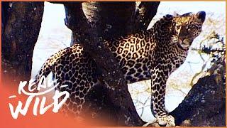 Makadikgadi: Wild Animals Of Botswana | [Predators And Preys Documentary] | Wild Things