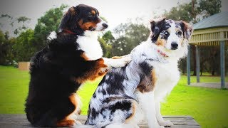 Funny Dogs  🐶 😍 Funny Amusing Dogs (Part 1) [Funny Pets]