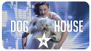 images Best Of Got Talent Dog Performance Auditions From Around The World