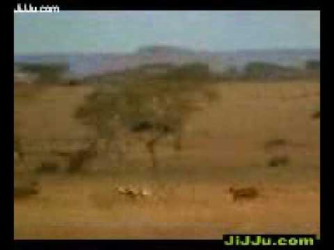 Xxx Mp4 Cheeta XDesi Mobi 3gp Sex