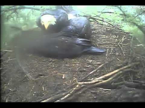 Decorah eagles 6-15-11 Sudden Storm