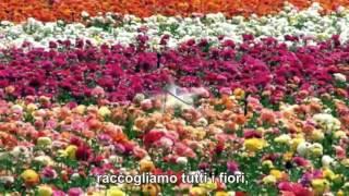 Riccardo Cocciante   Margherita con testo