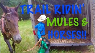 TRAIL RIDING MULES & HORSES
