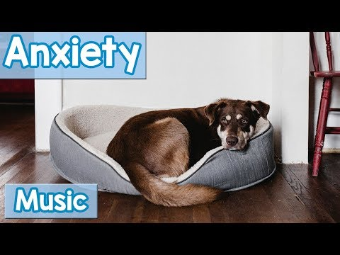 Xxx Mp4 The BEST Relaxing Dog Music For Dogs With Anxiety Soothe Your Dogs Anxiety With This Natural Remedy 3gp Sex