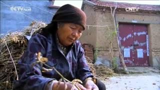 أفلام وثائقية: صرخة الأراضي الرطبة 2016-01-26