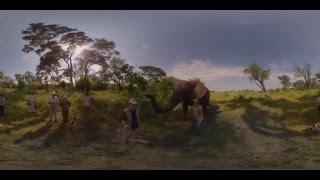 360 4K Video Elephant walk, Oculus Rift VR - Photos of Africa