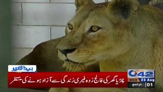 News Headlines | 07:00 PM | 23 August 2017 | City42