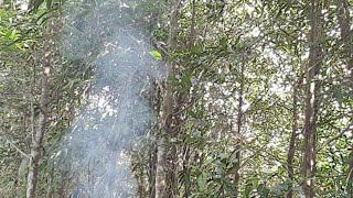 Primitive Skills;Trapping and Hunting, live videos in forest