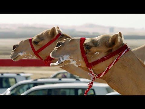 One Million Dollar Camel Race   Wild Arabia   BBC