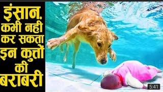 agar aisa dost nhi hota to koi nhi bacha sakta tha is bachche ko !! dogs saves human life