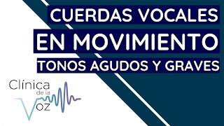 Cuerdas vocales en movimiento: tonos agudos y graves