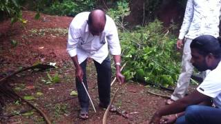 Russell viper caught in mangalore home