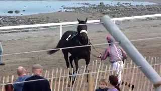 Racehorse Spooked - Laytown Rodeo 2014