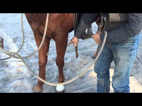 How To Get A Horse To Stand Still When You Get On